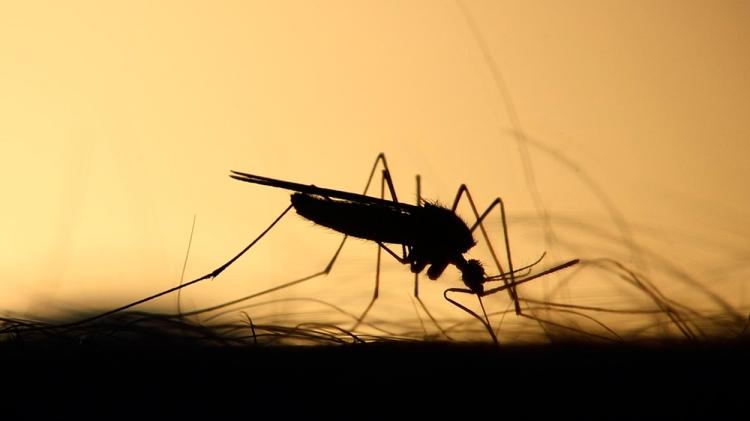 Mosquito a contraluz / PIXABAY