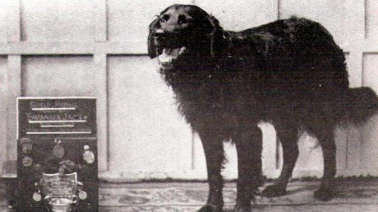 El heroico perro Jack de Swansea / SWANSEA
