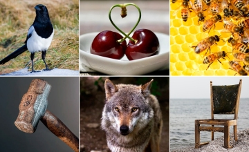 Urraca, cerezas, abejas, martillo, lobo y silla / PdF